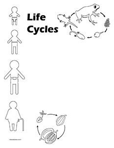 The Circle of Life.Life Cycles-